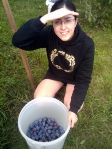 Plum picking in Austria. Yes, that is an Elder Scrolls Online hoodie - bring it on!