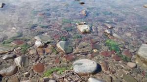 rock pools 1_800