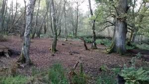 woodlands_600